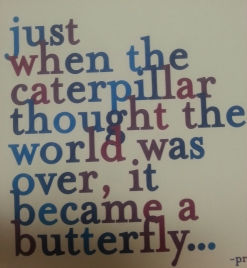 caterpillar becomes a butterfly